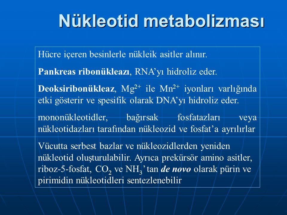 Nükleotid metabolizması
