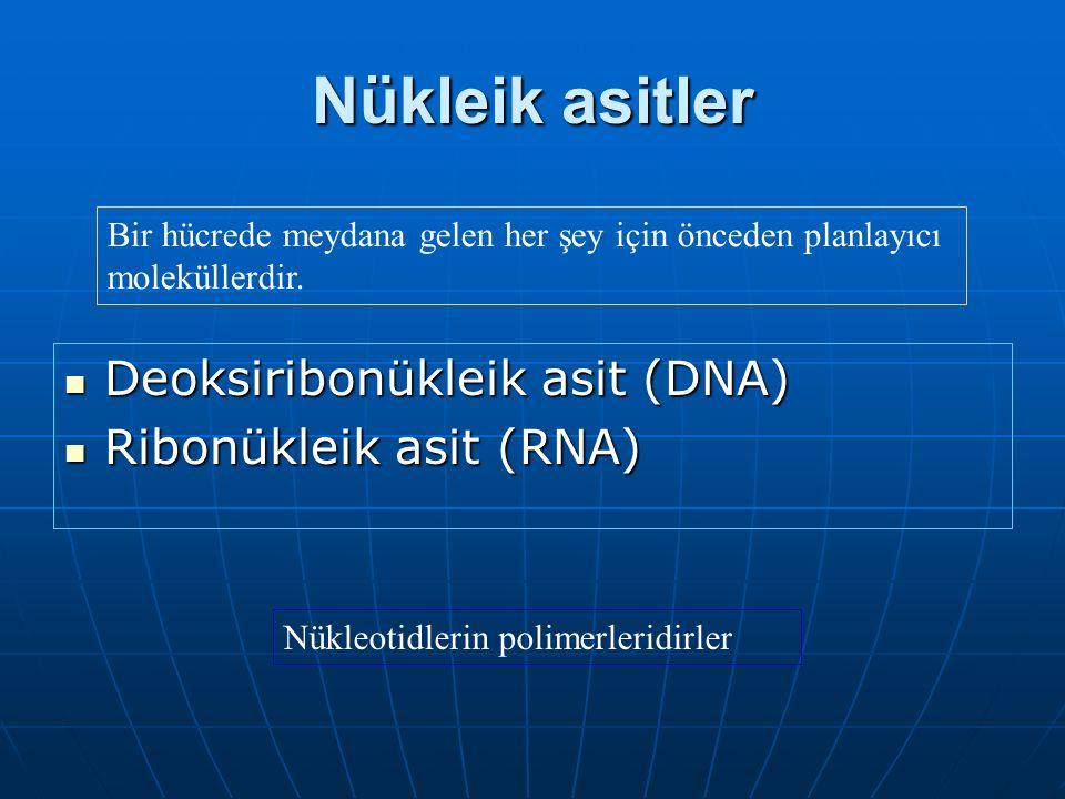 Nükleik asitler Deoksiribonükleik asit (DNA) Ribonükleik asit (RNA)