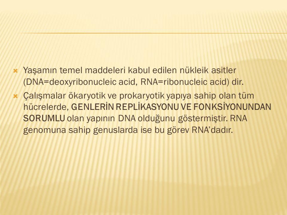 Yaşamın temel maddeleri kabul edilen nükleik asitler (DNA=deoxyribonucleic acid, RNA=ribonucleic acid) dir.