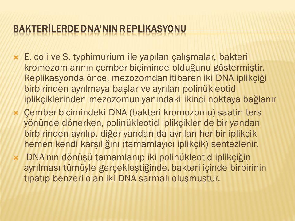 BAKTERİLERDE DNA'NIN REPLİKASYONU