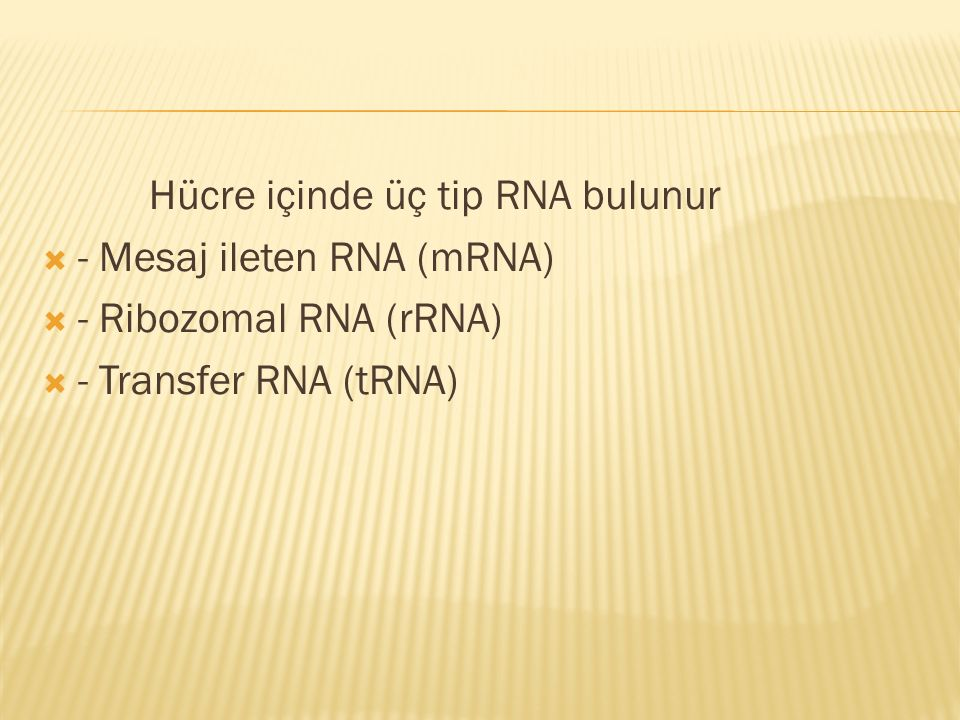 Hücre içinde üç tip RNA bulunur