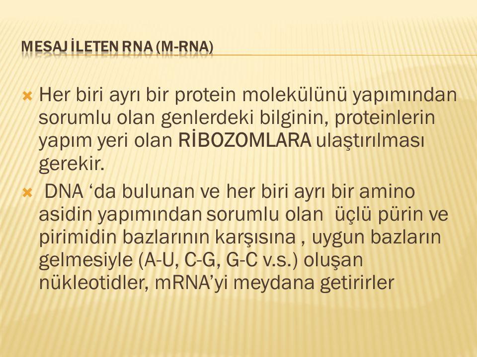 MESAJ İLETEN RNA (m-RNA)
