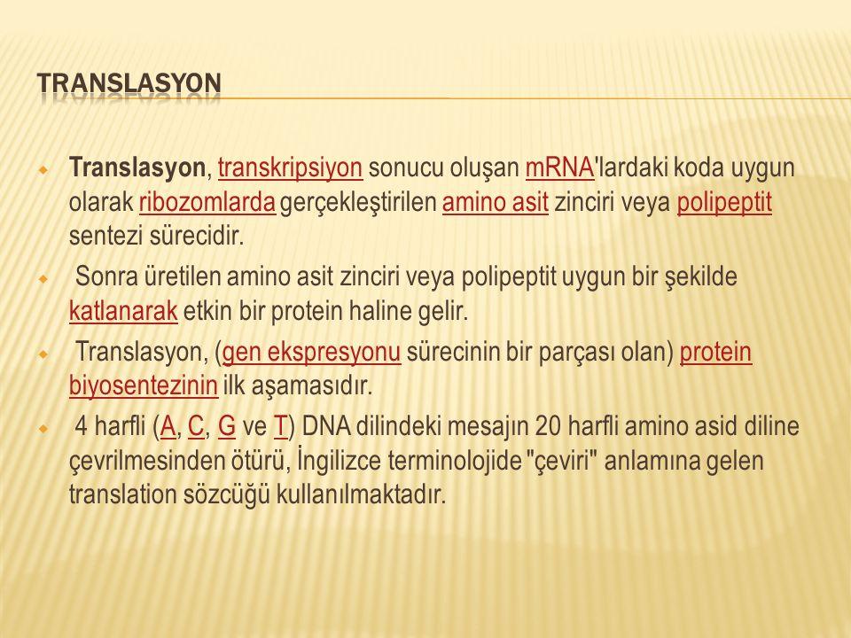 TRANSLASYON