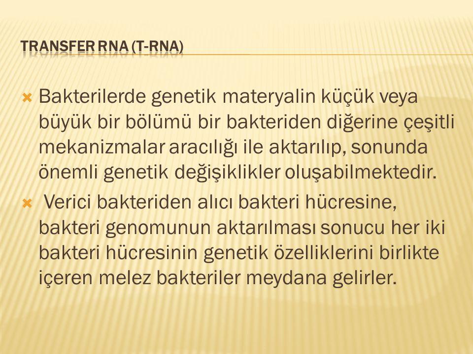 TRANSFER RNA (t-RNA)