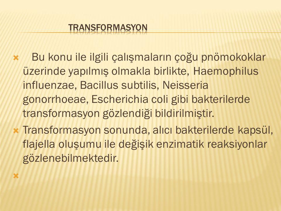 TRANSFORMASYON