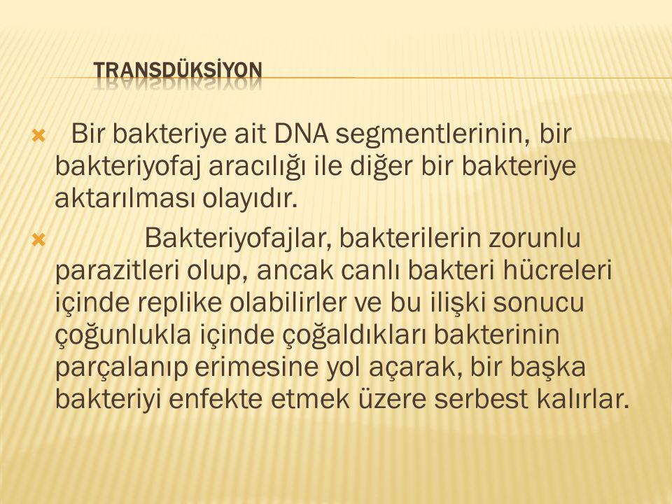 TRANSDÜKSİYON Bir bakteriye ait DNA segmentlerinin, bir bakteriyofaj aracılığı ile diğer bir bakteriye aktarılması olayıdır.