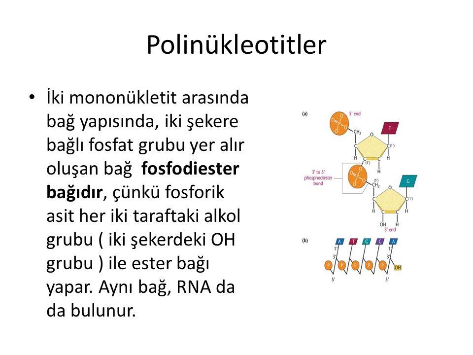 Polinükleotitler