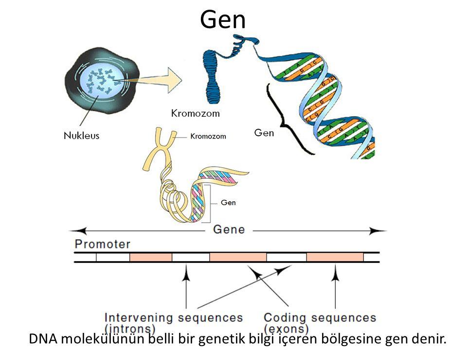 Gen DNA molekülünün belli bir genetik bilgi içeren bölgesine gen denir.