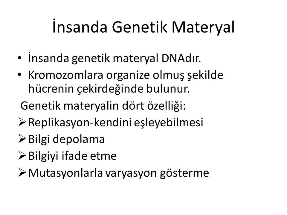 İnsanda Genetik Materyal