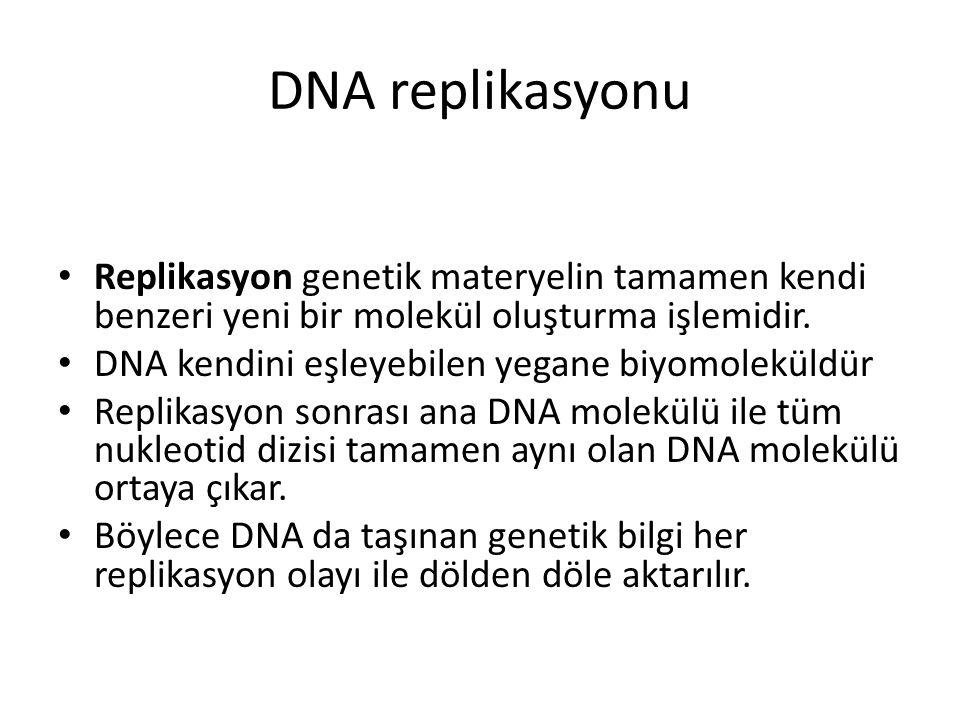 DNA replikasyonu Replikasyon genetik materyelin tamamen kendi benzeri yeni bir molekül oluşturma işlemidir.