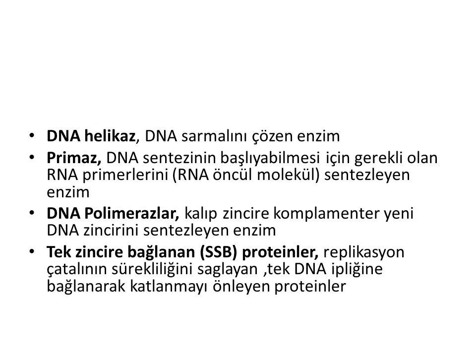 DNA helikaz, DNA sarmalını çözen enzim