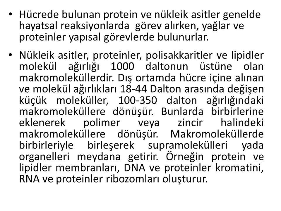 Hücrede bulunan protein ve nükleik asitler genelde hayatsal reaksiyonlarda görev alırken, yağlar ve proteinler yapısal görevlerde bulunurlar.