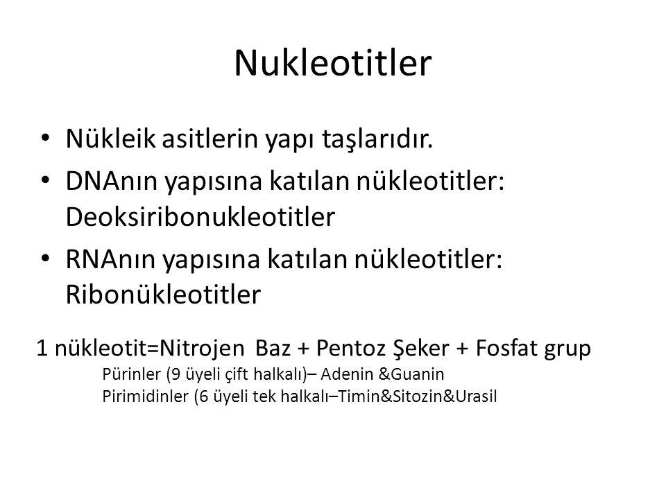Nukleotitler Nükleik asitlerin yapı taşlarıdır.