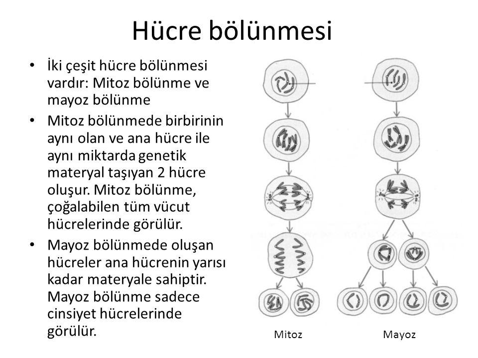 Hücre bölünmesi İki çeşit hücre bölünmesi vardır: Mitoz bölünme ve mayoz bölünme.