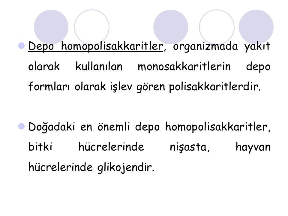 Depo homopolisakkaritler, organizmada yakıt olarak kullanılan monosakkaritlerin depo formları olarak işlev gören polisakkaritlerdir.