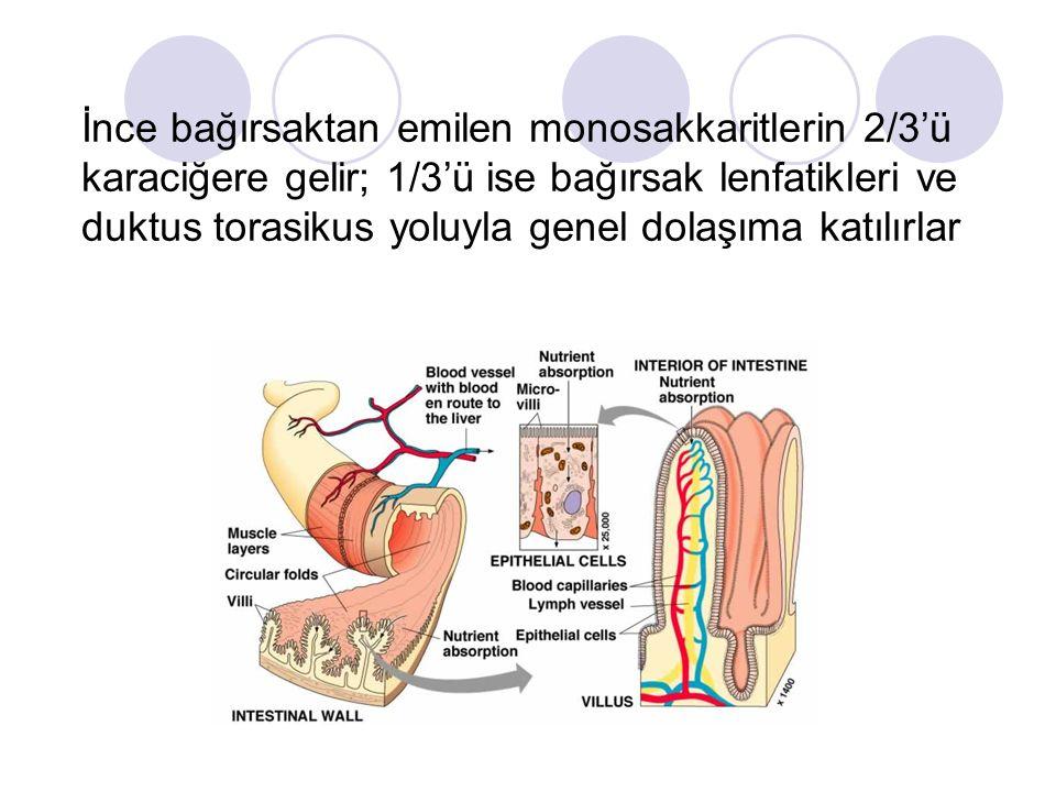 İnce bağırsaktan emilen monosakkaritlerin 2/3'ü karaciğere gelir; 1/3'ü ise bağırsak lenfatikleri ve duktus torasikus yoluyla genel dolaşıma katılırlar