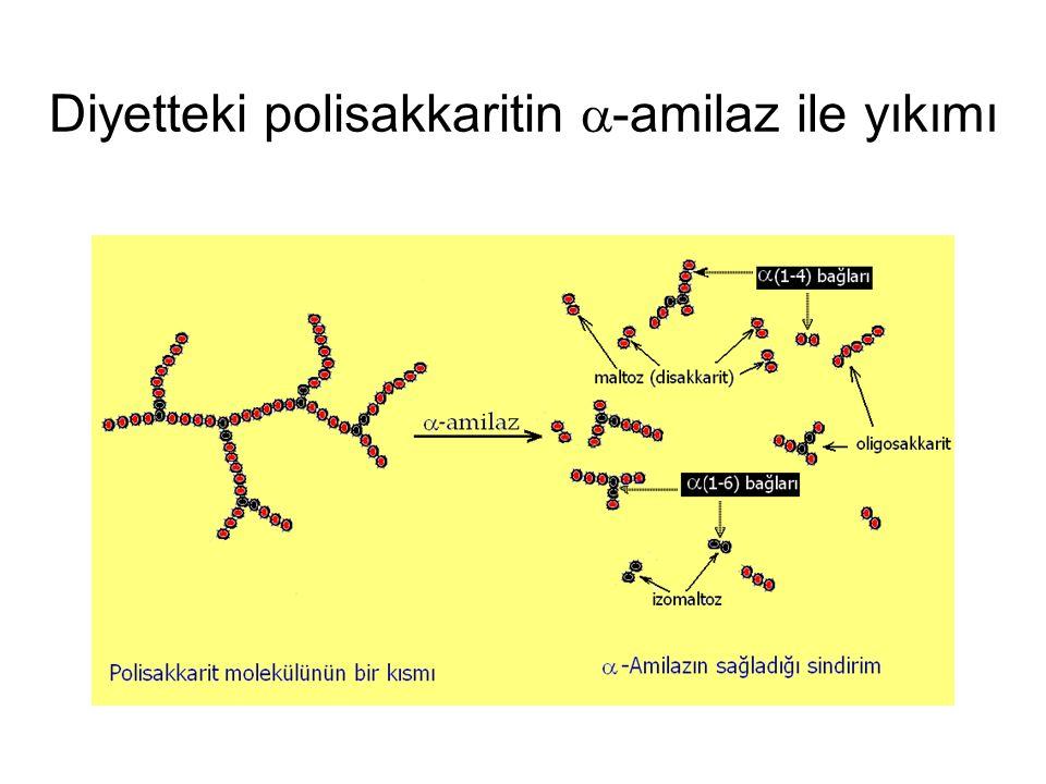 Diyetteki polisakkaritin a-amilaz ile yıkımı