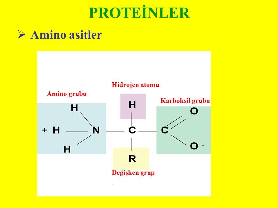 PROTEİNLER Amino asitler Hidrojen atomu Amino grubu Karboksil grubu
