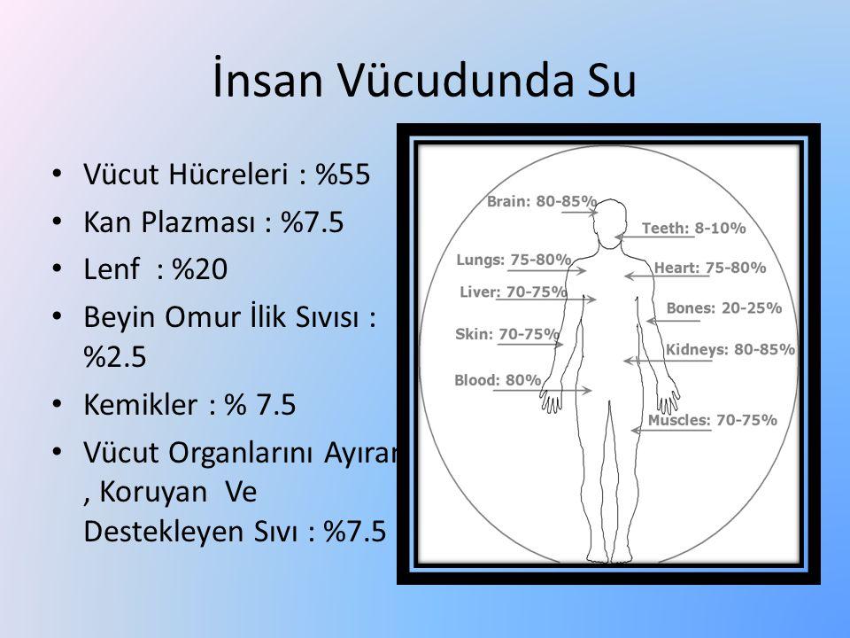 İnsan Vücudunda Su Vücut Hücreleri : %55 Kan Plazması : %7.5