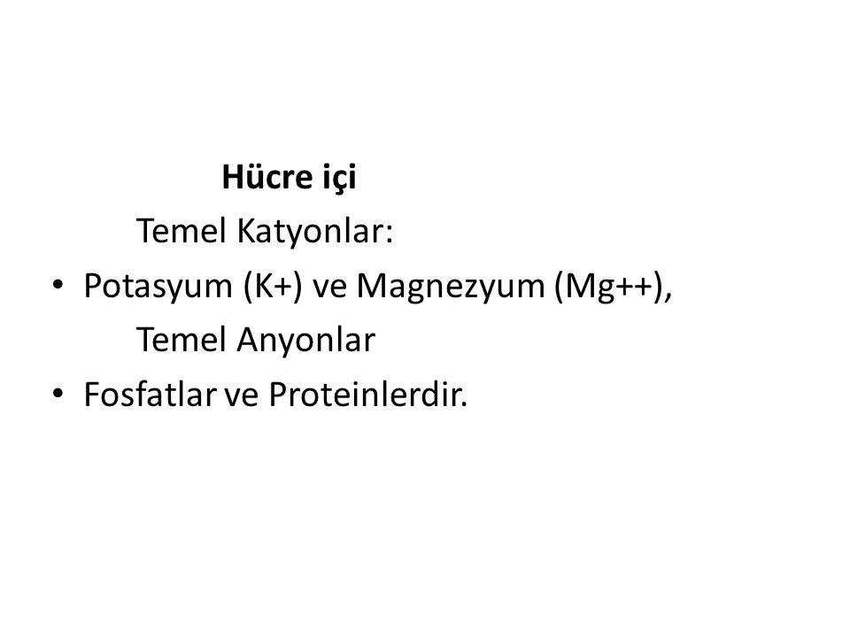 Hücre içi Temel Katyonlar: Potasyum (K+) ve Magnezyum (Mg++), Temel Anyonlar.