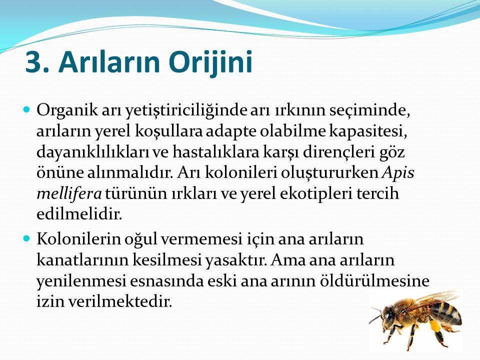 3. Arıların Orijini