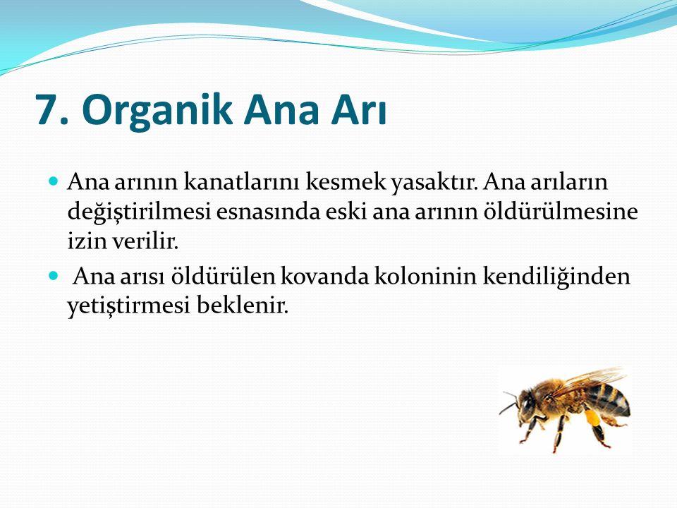 7. Organik Ana Arı Ana arının kanatlarını kesmek yasaktır. Ana arıların değiştirilmesi esnasında eski ana arının öldürülmesine izin verilir.