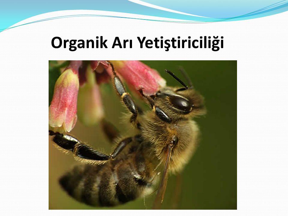 Organik Arı Yetiştiriciliği