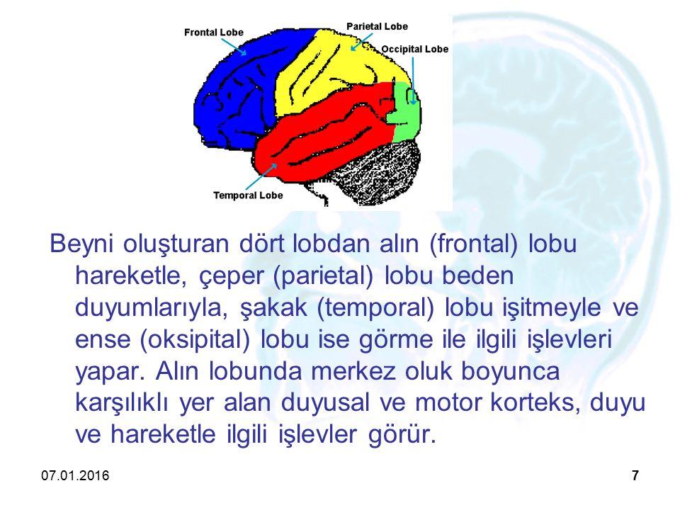 Beyni oluşturan dört lobdan alın (frontal) lobu hareketle, çeper (parietal) lobu beden duyumlarıyla, şakak (temporal) lobu işitmeyle ve ense (oksipital) lobu ise görme ile ilgili işlevleri yapar. Alın lobunda merkez oluk boyunca karşılıklı yer alan duyusal ve motor korteks, duyu ve hareketle ilgili işlevler görür.