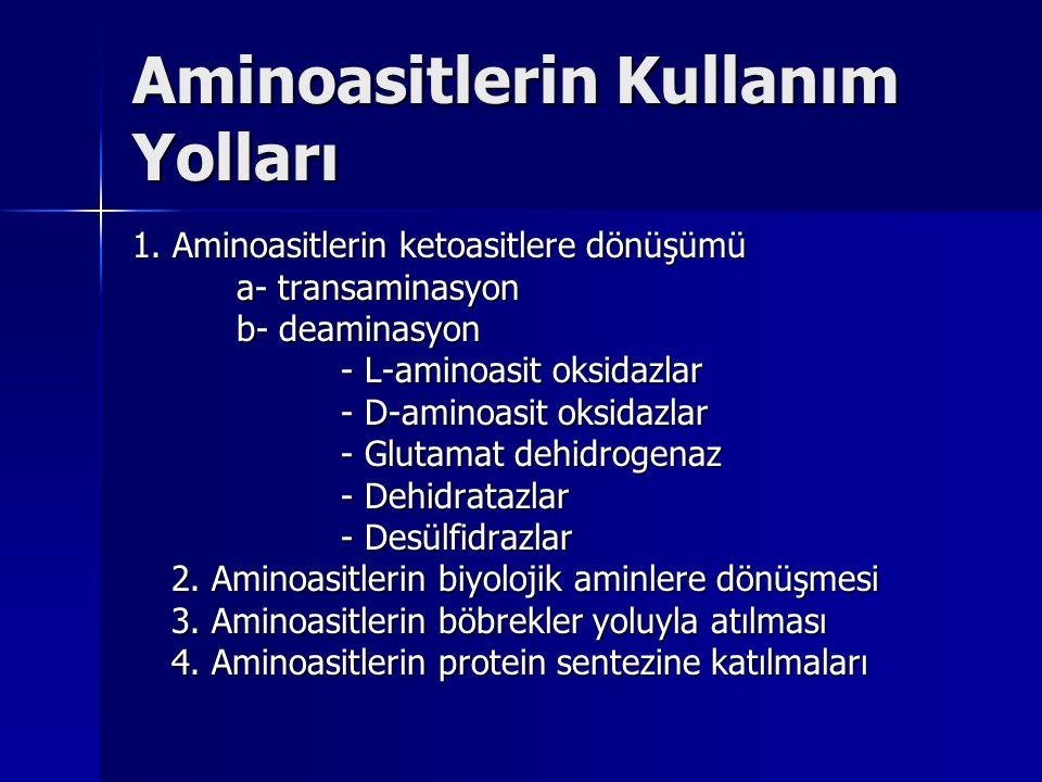 Aminoasitlerin Kullanım Yolları