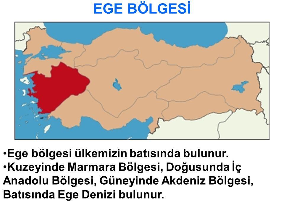 EGE BÖLGESİ Ege bölgesi ülkemizin batısında bulunur.