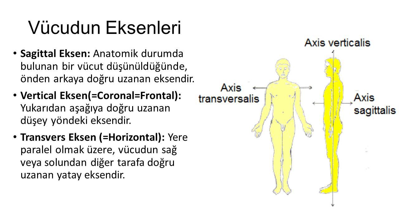 Vücudun Eksenleri Sagittal Eksen: Anatomik durumda bulunan bir vücut düşünüldüğünde, önden arkaya doğru uzanan eksendir.