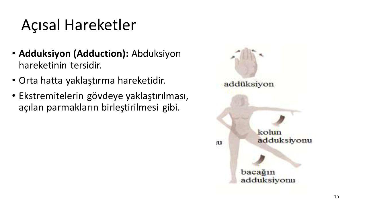 Açısal Hareketler Adduksiyon (Adduction): Abduksiyon hareketinin tersidir. Orta hatta yaklaştırma hareketidir.