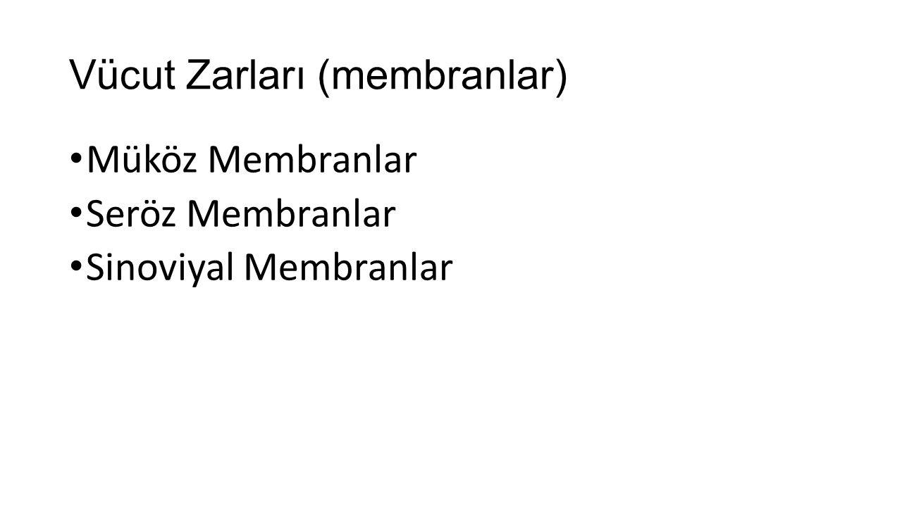 Vücut Zarları (membranlar)