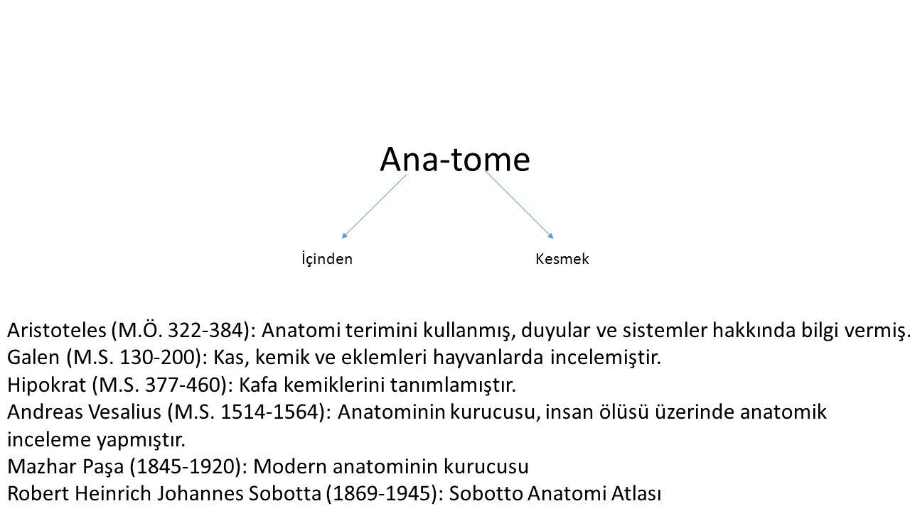 Ana-tome İçinden. Kesmek. Aristoteles (M.Ö. 322-384): Anatomi terimini kullanmış, duyular ve sistemler hakkında bilgi vermiş.