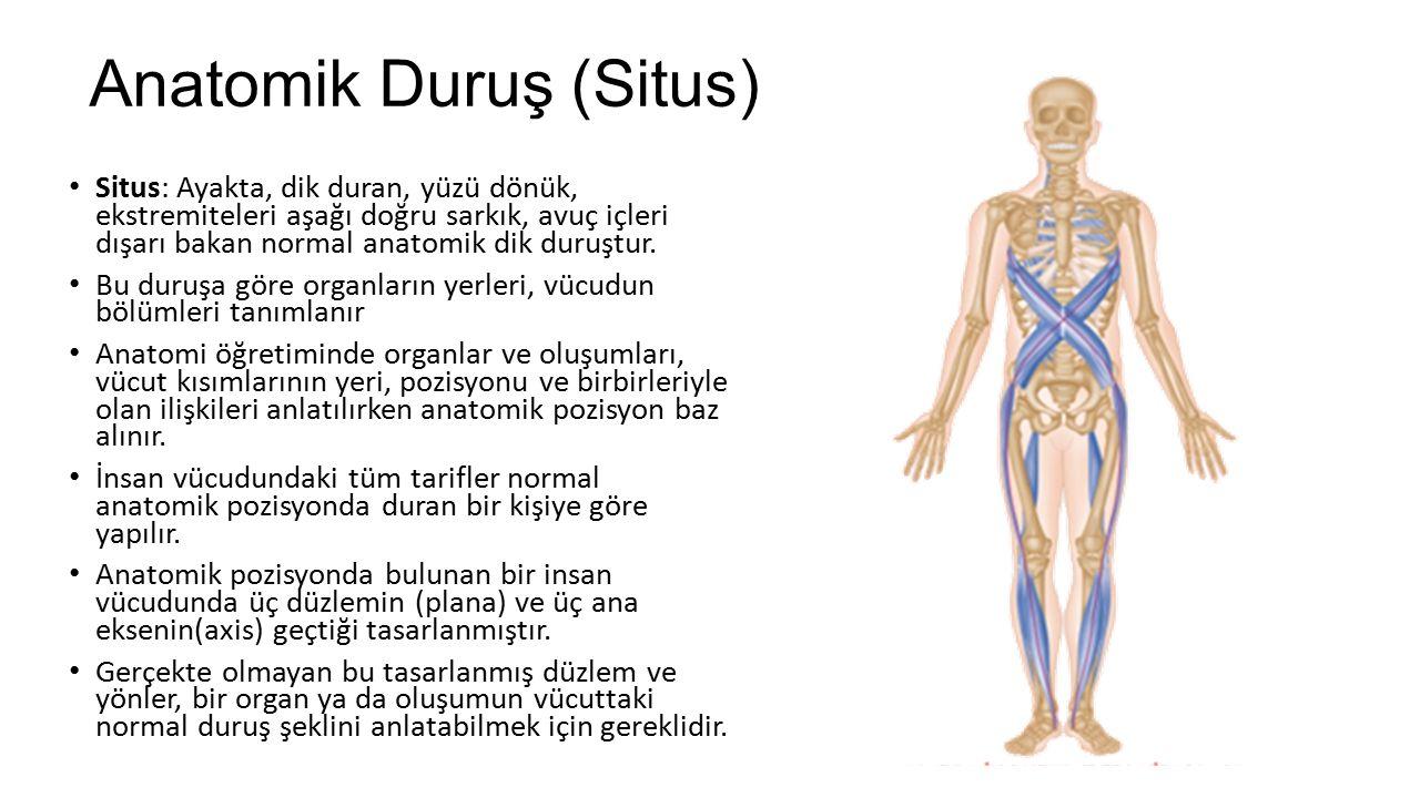 Anatomik Duruş (Situs)