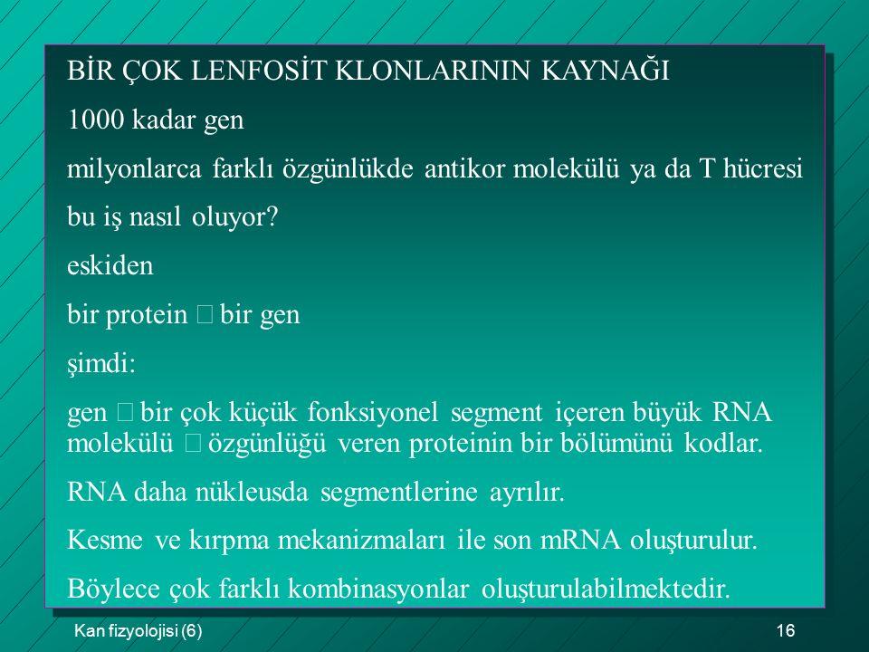BİR ÇOK LENFOSİT KLONLARININ KAYNAĞI 1000 kadar gen