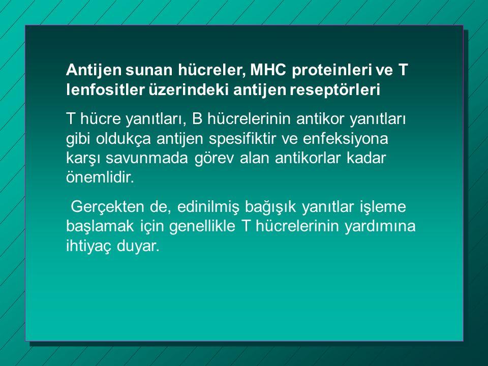 Antijen sunan hücreler, MHC proteinleri ve T lenfositler üzerindeki antijen reseptörleri