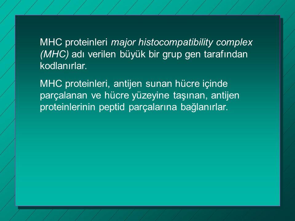 MHC proteinleri major histocompatibility complex (MHC) adı verilen büyük bir grup gen tarafından kodlanırlar.
