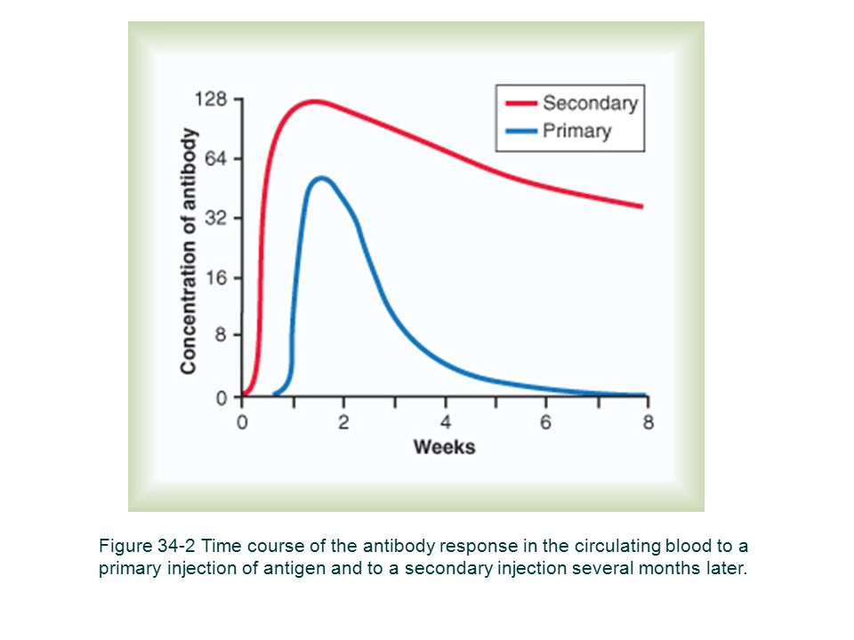 Figure 34-2 Time course of the antibody response in the circulating blood to a primary injection of antigen and to a secondary injection several months later.