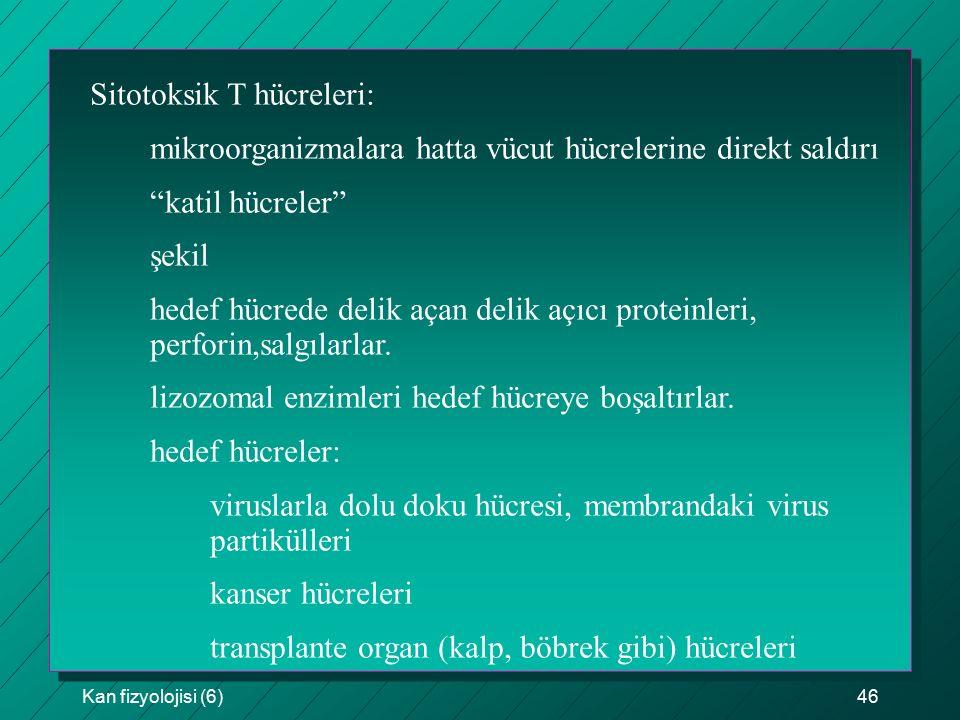 Sitotoksik T hücreleri:
