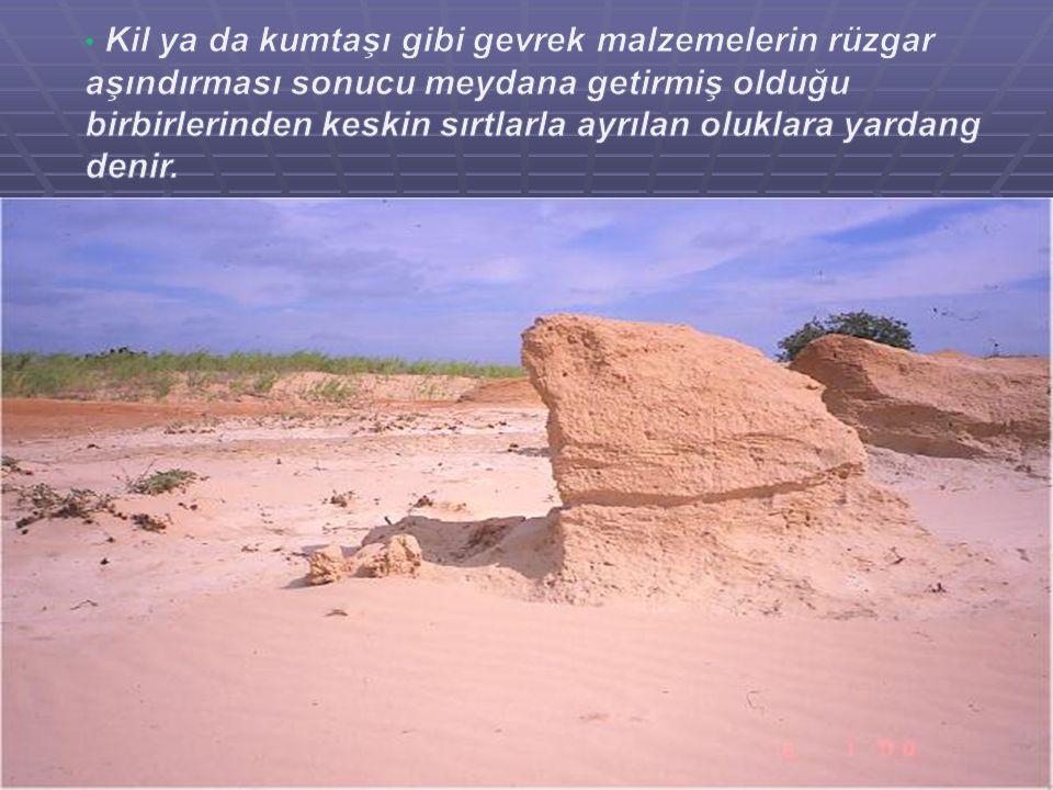 Kil ya da kumtaşı gibi gevrek malzemelerin rüzgar aşındırması sonucu meydana getirmiş olduğu birbirlerinden keskin sırtlarla ayrılan oluklara yardang denir.