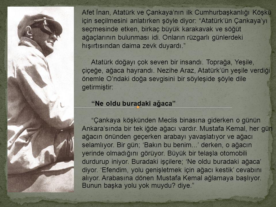 Afet İnan, Atatürk ve Çankaya'nın ilk Cumhurbaşkanlığı Köşkü için seçilmesini anlatırken şöyle diyor: Atatürk'ün Çankaya'yı seçmesinde etken, birkaç büyük karakavak ve söğüt ağaçlarının bulunması idi.