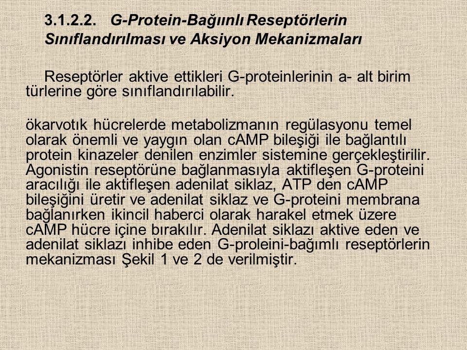3.1.2.2. G-Protein-Bağıınlı Reseptörlerin