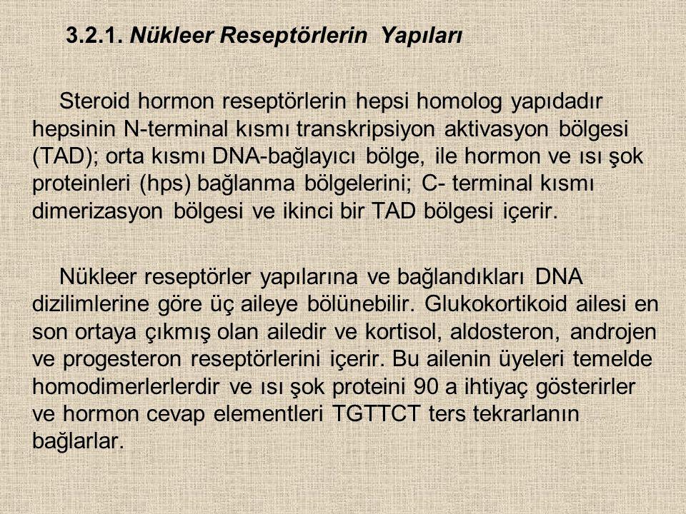 3.2.1. Nükleer Reseptörlerin Yapıları
