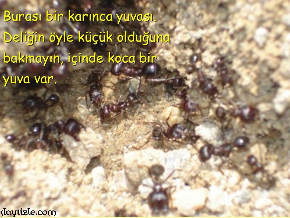 Burası bir karınca yuvası.