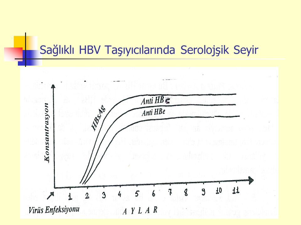 Sağlıklı HBV Taşıyıcılarında Serolojşik Seyir