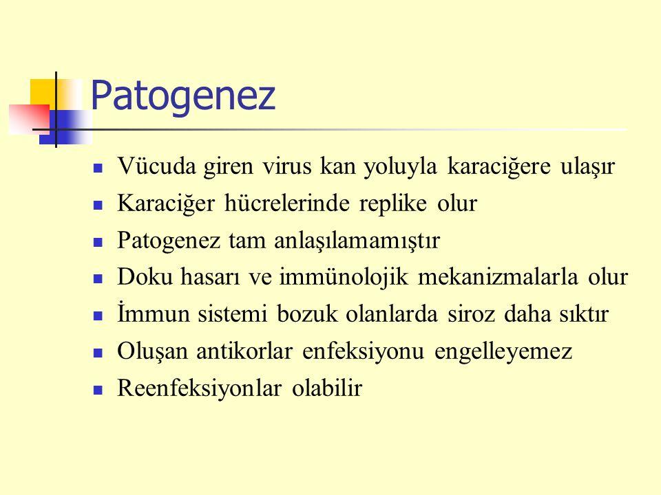 Patogenez Vücuda giren virus kan yoluyla karaciğere ulaşır