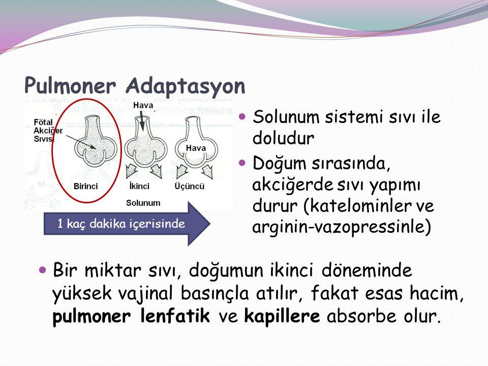 Pulmoner Adaptasyon Solunum sistemi sıvı ile doludur. Doğum sırasında, akciğerde sıvı yapımı durur (katelominler ve arginin-vazopressinle)