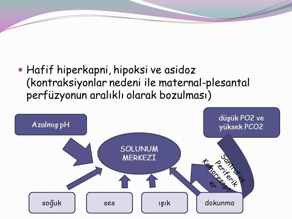 Santral ve Periferik Kemoreseptörler