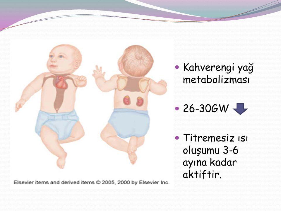 Kahverengi yağ metabolizması